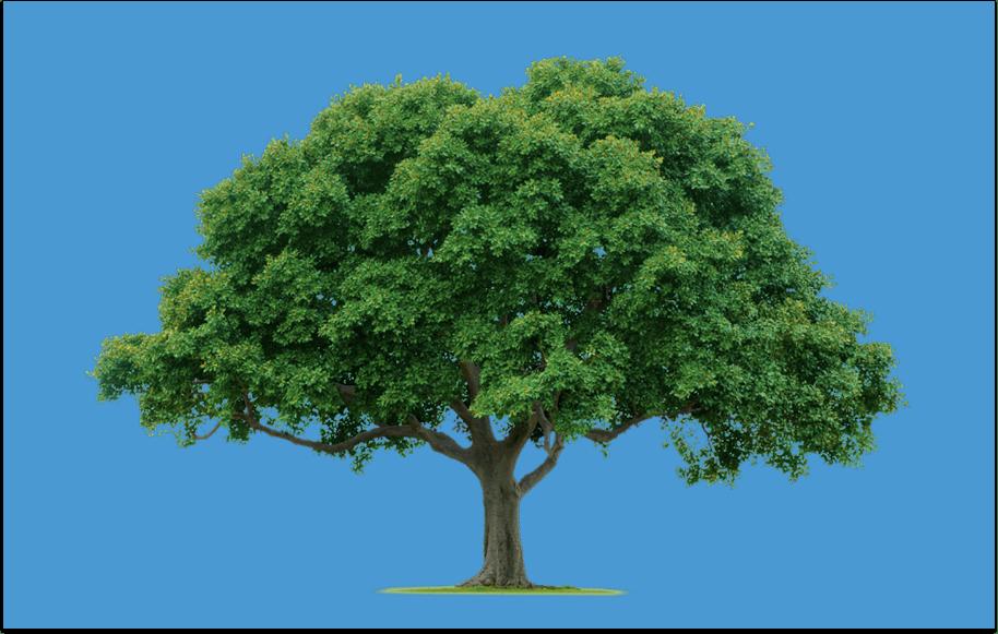 Ik droom een boom (Berkeley)